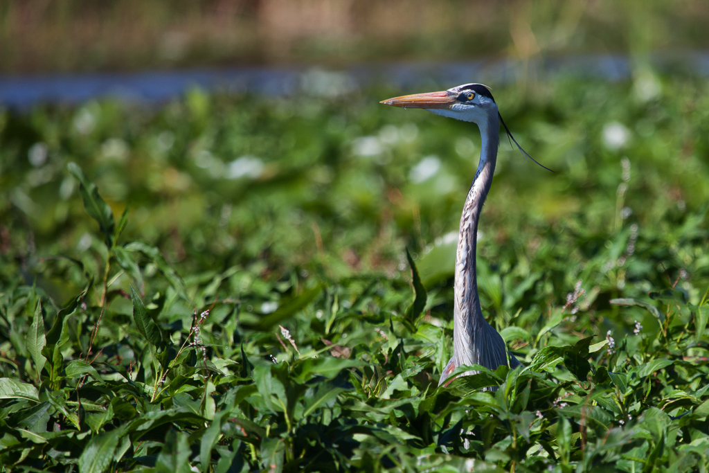 IMAGE: https://performancephoto.smugmug.com/Portfolio/Critters/Birds/n-r7Sxs/i-M6whcpF/0/O/i-M6whcpF.jpg