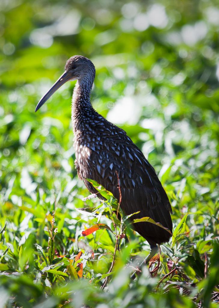 IMAGE: https://performancephoto.smugmug.com/Portfolio/Critters/Birds/n-r7Sxs/i-zVD6dc5/0/O/i-zVD6dc5.jpg